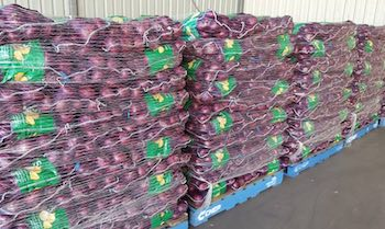 onion-net-1 copy